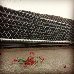 flowers and chainlink fence